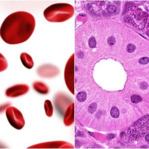 Histology/Hematology/Cytology
